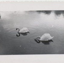 Image of 1993.34y - Photograph