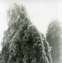 """Image of Print, Photographic - Copies: 1 ( 1 copy)   """"Oregon State Capitol  grounds silver thaw January 6-10, 1942"""" (back)"""