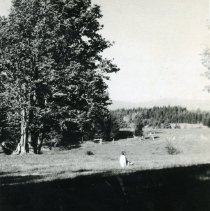 """Image of Print, Photographic - Copies: 1 ( 1 copy)   """"1965 The 1915 teacher - 50 years later on Maple Grove schoolgrounds. Some of the  old maples still stand."""" (back)"""