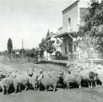 """Image of Print, Photographic - Copies: 1 ( 1 copy)   """"Main Street, St. Paul, about 1906 Front to back - Kirk store, Miles McDonald house, Old Cemetery just beyond small white house in rear [typed]"""" (back)  """"1908 - Hazel Kirk-       Miles McDonald                                           Goats?                                           Emmett Kirk Store"""" (back)"""