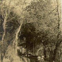 Image of 245-355 - Print, Photographic