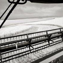Image of Harvesting
