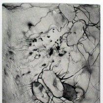 """Image of Microscapes """"Salmonella"""""""