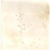 Image of Novia James White War Photographs - Novia James White Photograph Collection