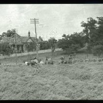 Image of Men bagging crops - Edward and Josephine Kemp Lantern Slide Collection
