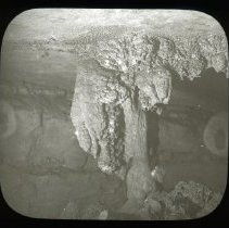 Image of Climbing Bear - H. C. Ganter Lantern Slides Collection