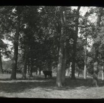 Image of Woods  - Edward and Josephine Kemp Lantern Slide Collection