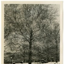 Image of Winter in Shawnee Park, Louisville, Ky. - Josephine Gertrude Simmons Collection