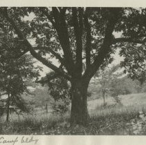 Image of Naturalization tree - Subject Photograph Collection
