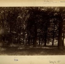 Image of Woods near Bellefonte Furnace                                                                                                                                                                                                                                  - Rogers Clark Ballard Thruston Mountain Collection