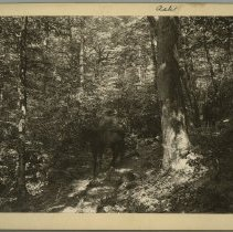 Image of Ash tree on Razors Fork                                                                                                                                                                                                                                        - Rogers Clark Ballard Thruston Mountain Collection