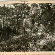 Image of Corner to three acreage patents                                                                                                                                                                                                                                - Rogers Clark Ballard Thruston Mountain Collection