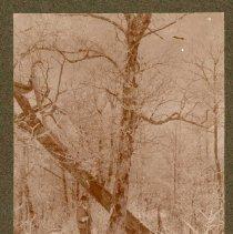 Image of Winter scene on top of ridge                                                                                                                                                                                                                                   - Rogers Clark Ballard Thruston Mountain Collection