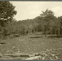 Image of Buckwheat field                                                                                                                                                                                                                                                - Rogers Clark Ballard Thruston Mountain Collection