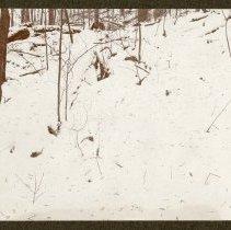 Image of Yellow poplar seed                                                                                                                                                                                                                                             - Rogers Clark Ballard Thruston Mountain Collection