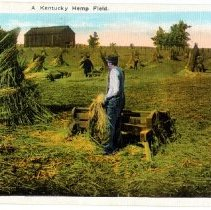 Image of A Kentucky Hemp Field                                                                                                                                                                                                                                          - Postcard Collection