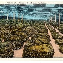 Image of Interior of a Tobacco Warehouse                                                                                                                                                                                                                                - Postcard Collection