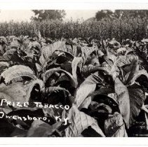 Image of Prize Tobacco                                                                                                                                                                                                                                                  - Postcard Collection