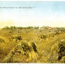 Image of Wheat Harvest in Kentucky                                                                                                                                                                                                                                      - Postcard Collection
