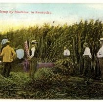 Image of Cutting Hemp by Machine                                                                                                                                                                                                                                        - Postcard Collection