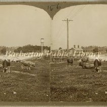 Image of 1891.001.154