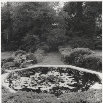 Image of 1996.02 - Lily Pond, West Garden