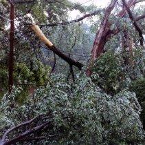 Image of 2008.353.30 - Damage to 124 Hesketh Street