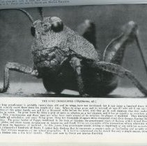 """Image of Page 97, """"The King Grasshopper"""""""