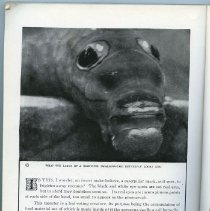 """Image of """"The Book of Monsters"""" advertisement, panel 1"""