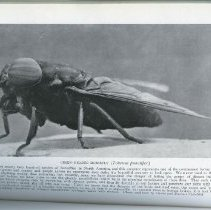 """Image of Page 90, """"Green-Headed Horsefly"""""""