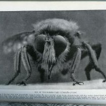 """Image of Page 94, """"One of the Robber Flies"""""""