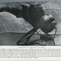 """Image of Page 95, """"The Dragon-Fly And Its Victim"""""""