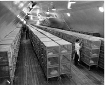 Image of William Gay Photograph Collection - Rabbit cages at the NIH Gaithersburg farm
