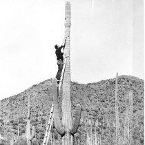 Image of Rocky Mountain Laboratory Photographs - Fieldwork in Arizona