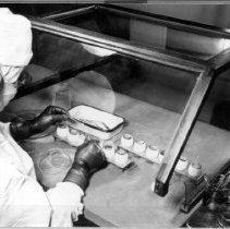 Image of Rocky Mountain Laboratory Photographs - Laboratory technician harvesting yolk sacs from eggs