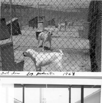 Image of William Gay Photograph Collection - Dog facilities at the NIH Animal Center