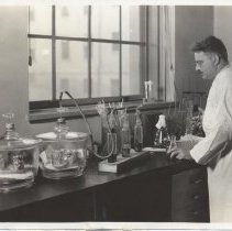 Image of Science Service - Bacteriologist B. S. Levine studying Staphylococci