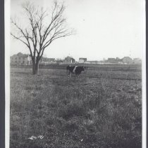 Image of 5247.020 - Capt. Gilberts Cow Pasture