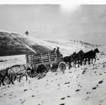 "Image of 1912 Idaho, Elk Imports - ""What started out as a great adventure turned into a much larger challenge when men and horses undertook to transport a herd of elk.  It would have been a huge undertaking in good weather but March, 1912, was fickle.  Where snow was needed for easier going, it melted and where it wasn't wanted, it fell.  Here they are pulling toward St. Anthony, Idaho, coming in after a grueling trip over Teton Pass, Wyoming.""