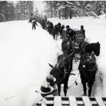 "Image of 1912 Wallowa County, Elk Imports - ""Mar. 1912.   Nearing Billy Meadows the snow was so deep often times the horses' backs were barely visible above the deep cuts.  The sleds were in almost constant danger of tipping over.  The trip took much longer than had been planned but all the elk arrived safely to their new home."""