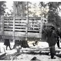 "Image of 1912 Oregon, Elk Imports 4 - ""March 1912 - Transferring crates from wagons to homemade sleds on way to Billy Meadows.  Ready to proceed --- Block and tackle were thrown over the limb of a huge Ponderosa pine tree and the men provided the muscle to transfer the crates from wagons to homemade sleds on their journey to Billy Meadows pasture.  It was considered a priveledge to be allowed along and to furnish teams and wagons."""