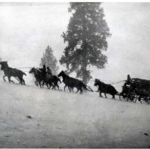 "Image of 1912 Wyoming, Elk Imports - ""A storm over Teton Pass, Wyoming, provides a challenge to man and beast.  It was just the beginning of a long trek for 15 Rocky Mountain elk on their way to St. Anthony, Idaho, from Jackson Hole, Wyoming, and on to Joseph, Oregon in March of 1912.  From Joseph the animals were hauled to Billy Meadows in the Chesnimnus Unit of Wallowa County.  This was the first of several such imports of elk into the area."""