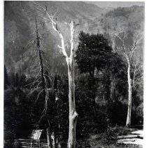 "Image of Oregon, Cabin - ""Head of Wallowa Lake in old days.  A cabin at the head of Wallowa Lake is almost lost in the background as dead trees stand stark against the canyon background.  Cabin was typical of the first constructed at 'The Lake' by summertime visitors."""