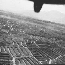 "Image of Aerial, Agricultural Features 2 - ""Strange acgricultural features in West Dutch New Guinea