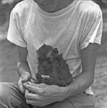 "Image of ""Jocko"" 5 - ""Dick Baxter's pet monkey Jocko"""