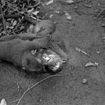 "Image of ""Jocko"" with Friend 4 - ""Dick Baxter's pet monkey Jocko"""