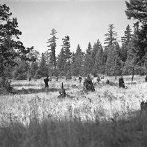 """Image of 41st Division, War Exercises 6 - """"41st Div. - War Games training - Fort Lewis - Blue Army advancing toward Red position"""""""
