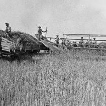 "Image of Alicel, Farm Header - ""Ruckman Header - Alicel area - 6 horses pushing, plus a headerbox wagon - 6 men - 1900+/-"""