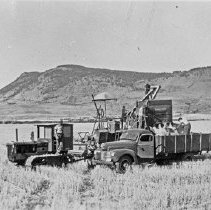 "Image of Alicel, Farming 1 - ""Jasper Place - white wheat 50 bu (bushels) / acre - Mt. Harris in background, so Alicel area"""