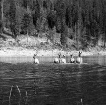 """Image of Wallowa Lake, Elk 3 - """"College Men's Club Weekend at Wallowa Lake - April 1940"""""""